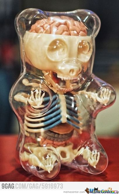 Gummy Bear Anatomy