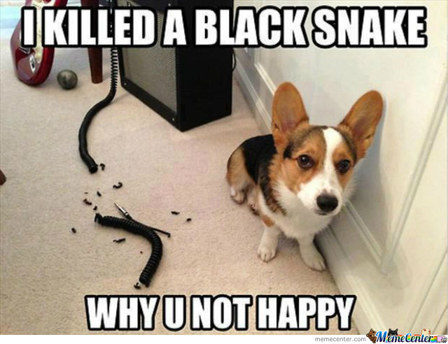 killed black snake