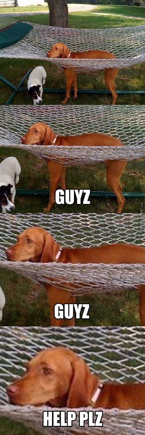 Hammocks, And Dogs Don't Go Well Together