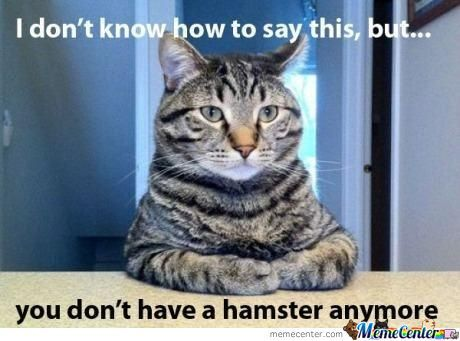 Hamster...is No More