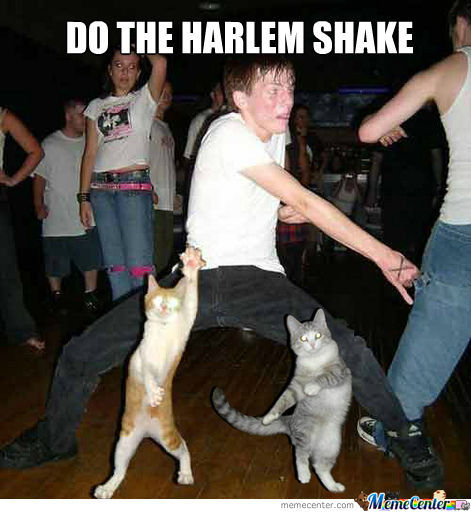 Harlem Shake Cat Edition