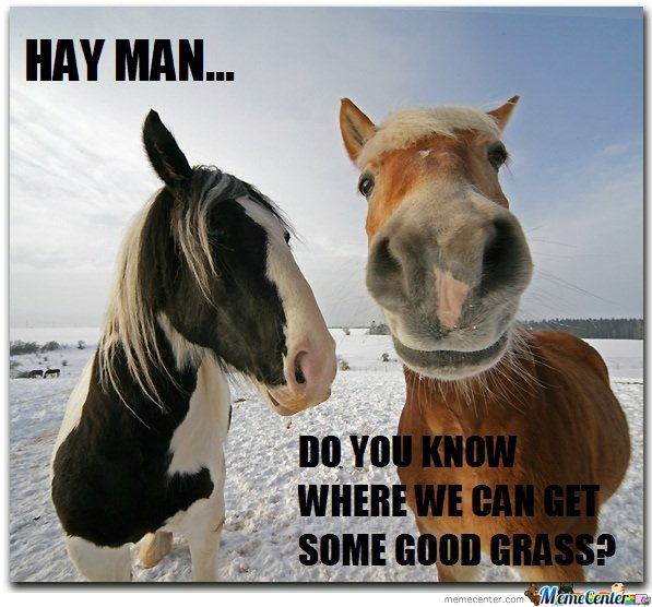 http://img.memecdn.com/hay-is-for-horses_o_151337.jpg