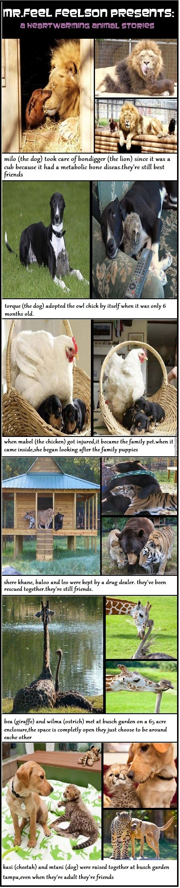 Heartwarming Animal Stories