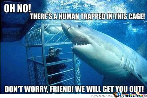 Helpful Shark