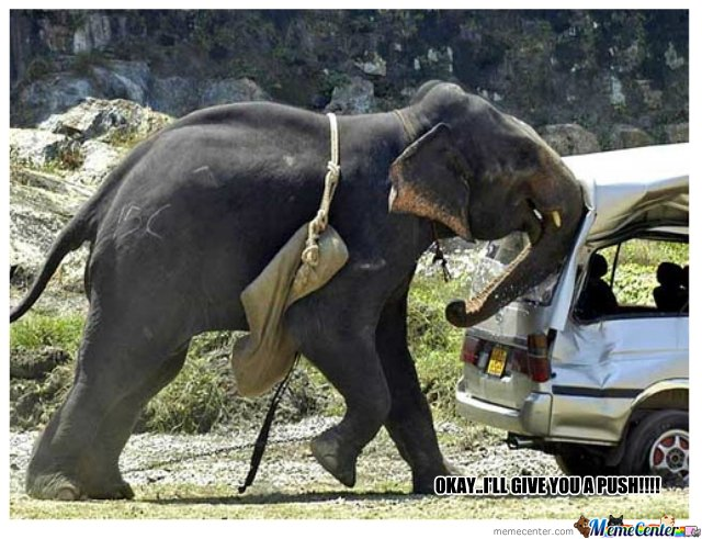 Helping elephant