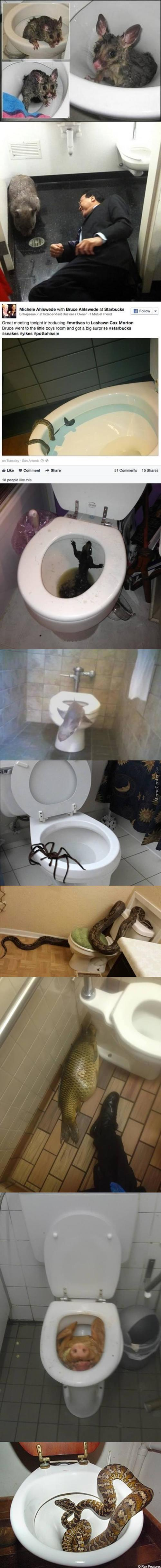 Here Are The 10 Most Insane Things People Ever Found In Their Toilets.