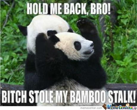 Hold Me Back Bra!