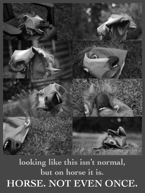 Horse. Not Even Once.