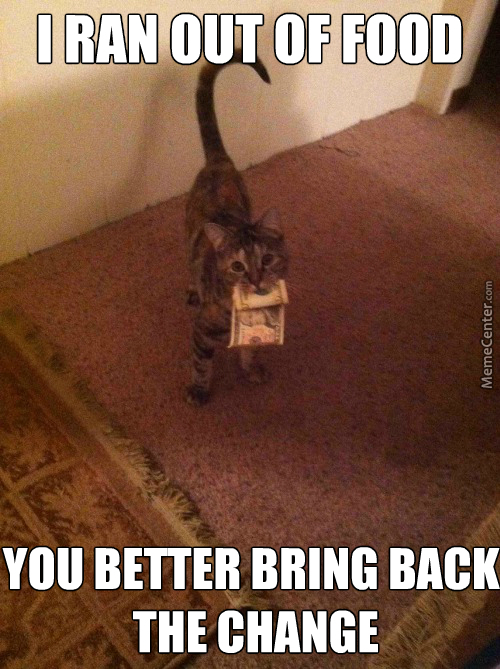 Household Cats Tend To Do This
