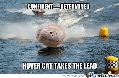 Image result for appropriate cat memes