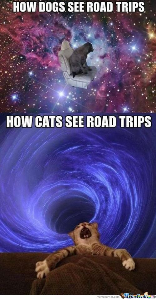 How Dogs And Cats See Road Trips