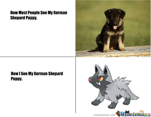 How People See My German Shepard Puppy