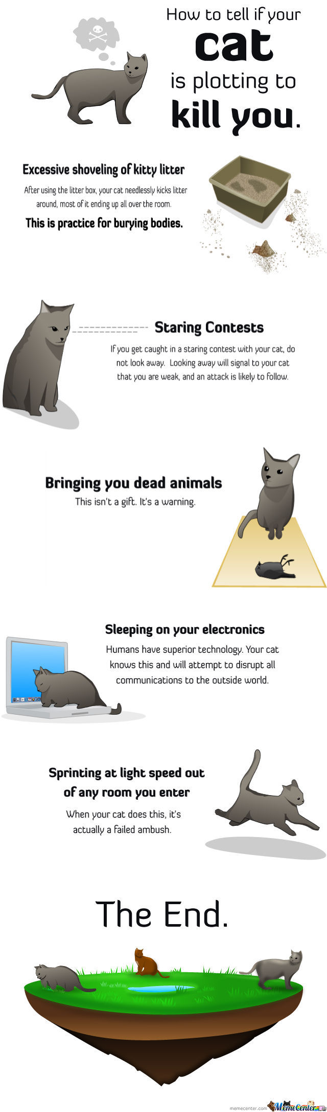 How To Tell If Your Cat Is Planning To Kill You.