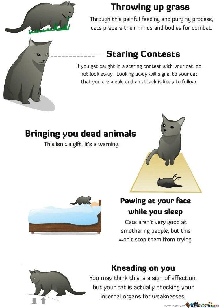 Signs Your Cat Is Trying To Kill You