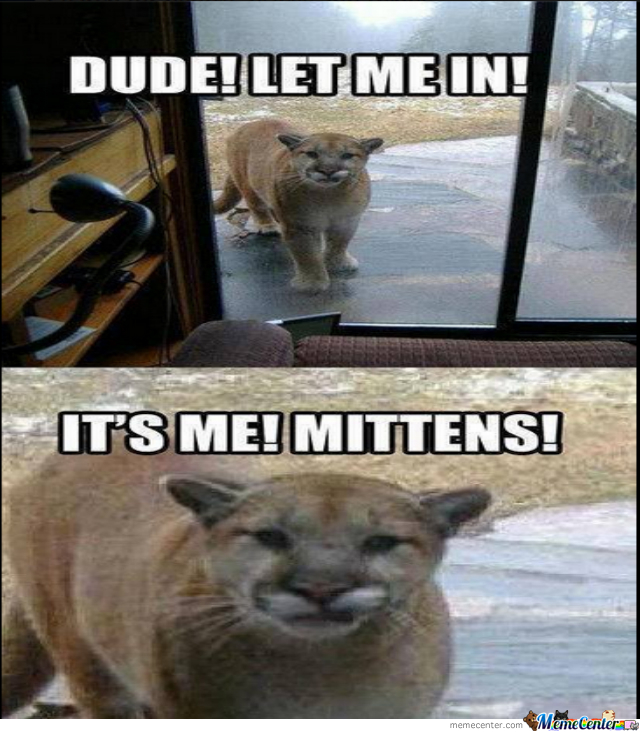 Human! Open The Door! It's Mittens!
