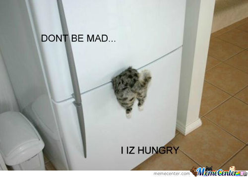 Hungry Cat Is Hungry!