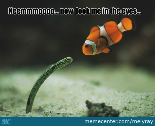 Hypno Fish Meet Nemo