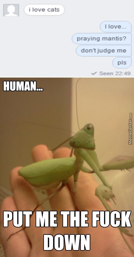 I'm Pretty Sure Even My Mantis Judges Me...