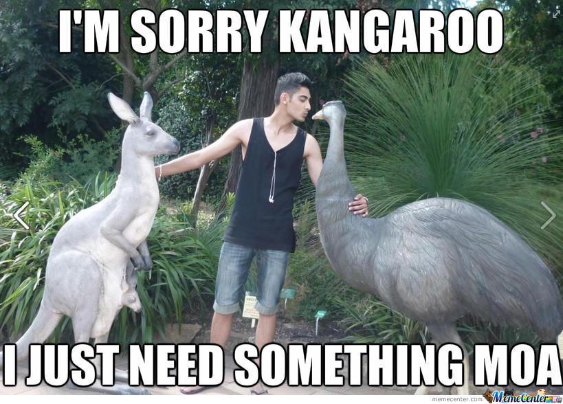 Funny I M Sorry Meme : I m so sorry kangaroo by gdawg meme center