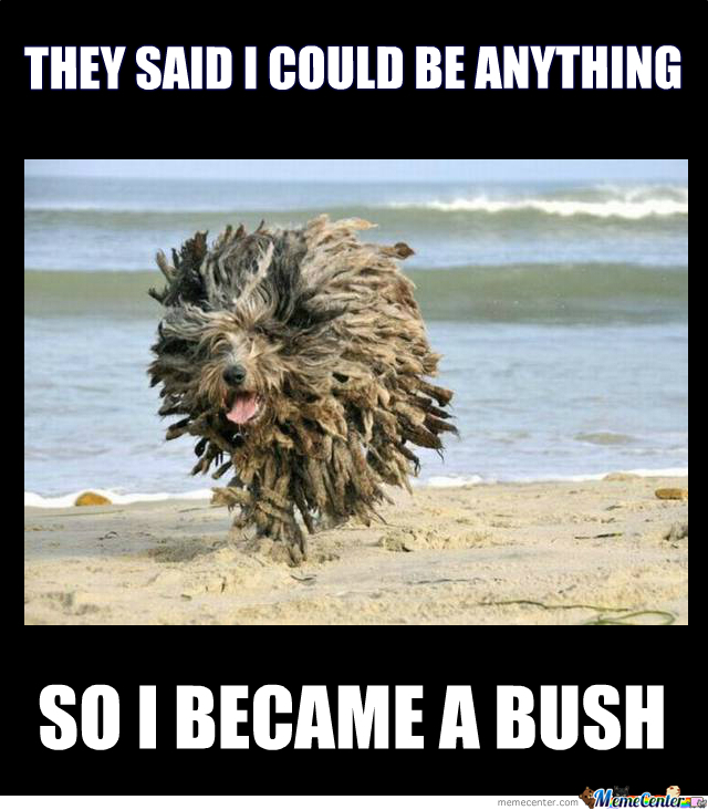 I Became A Bush