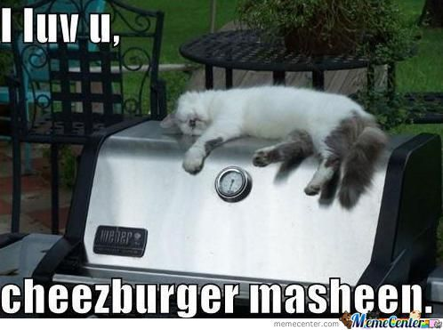 I Can Haz Cheezburgr?