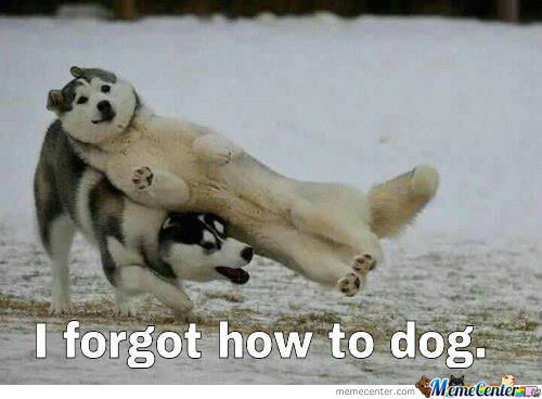 I Forgot How To Dog.