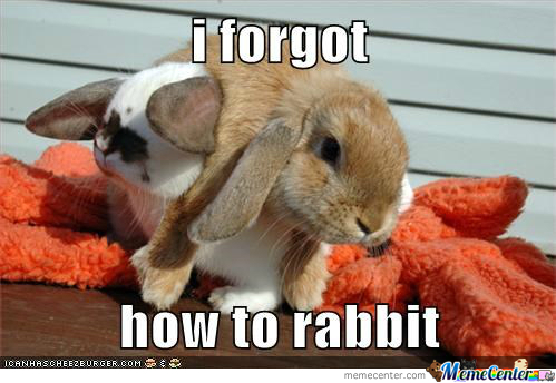 I Forgot How To Rabbit