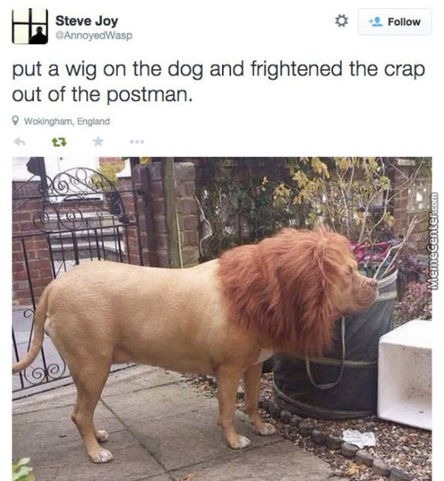 I Need A Dog And A Wig