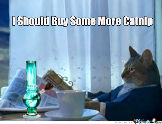 I Should Buy Some More Catnip