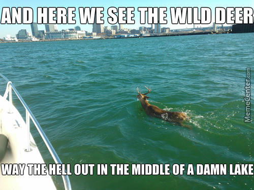 I Won't Tell You What Lake It Is, But The Way The Deer Is Swimming Is Quite Erie