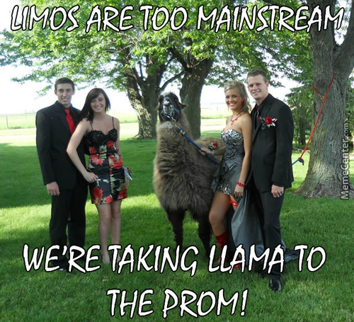 If I Owned A Llama I'd Totally Ride It To Work Everyday, Wearing A Tux, Monocle And Holding A Musket