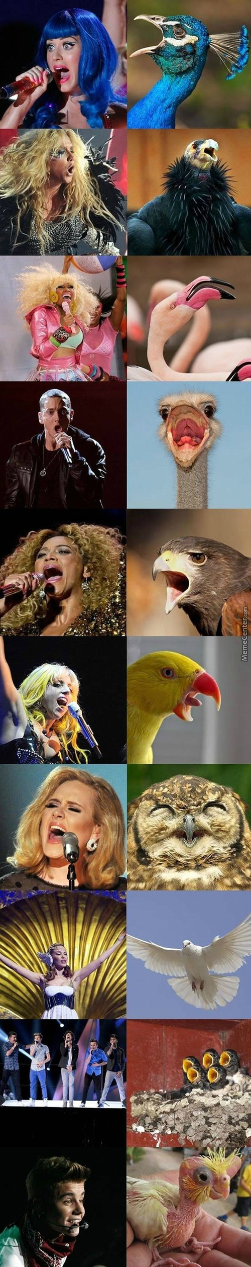 If Popstars Were Birds