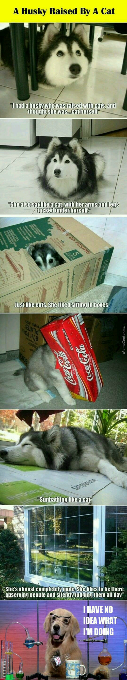 buying a cat