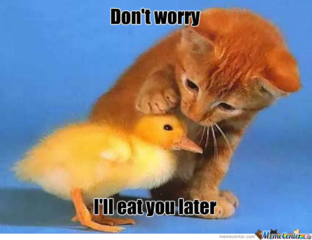 Don't Worry Litte Duck