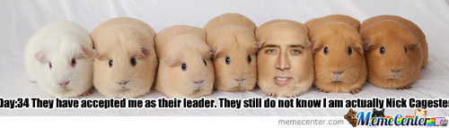 Image Of Hamsters Is Not Mine.