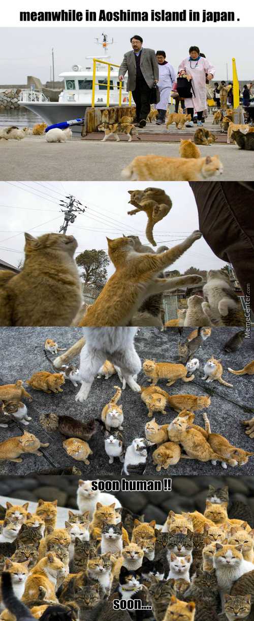 In This Island The Number Of Cats Is X6 The Number Of Human..this Is Were It All Began.