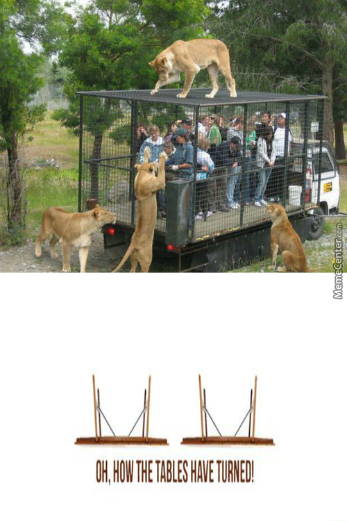 In World Were Animals Visit The Zoo To Watch Captive Humans