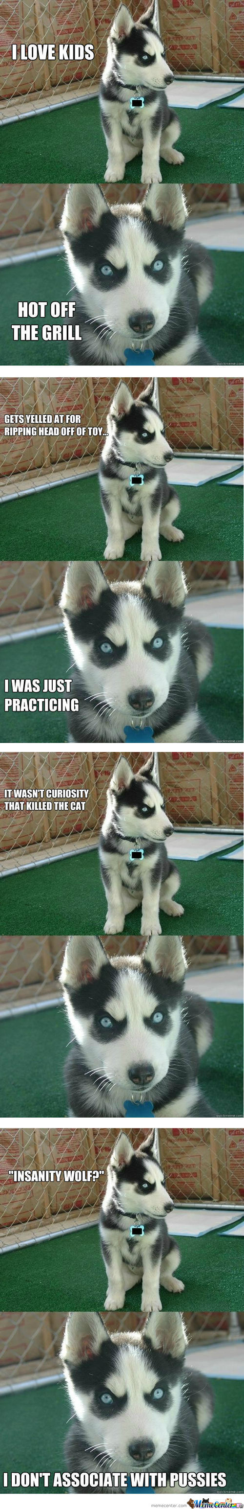 Insanity Puppy