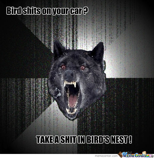 Insanity Wolf And Birds