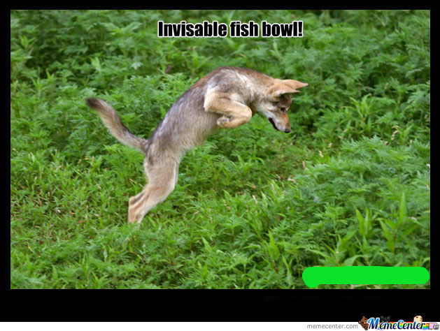 Invisable Fishbowl