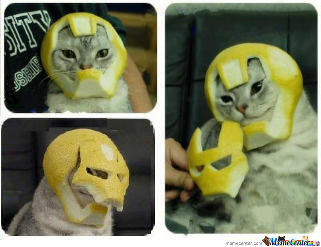 Iron Lemon Cat