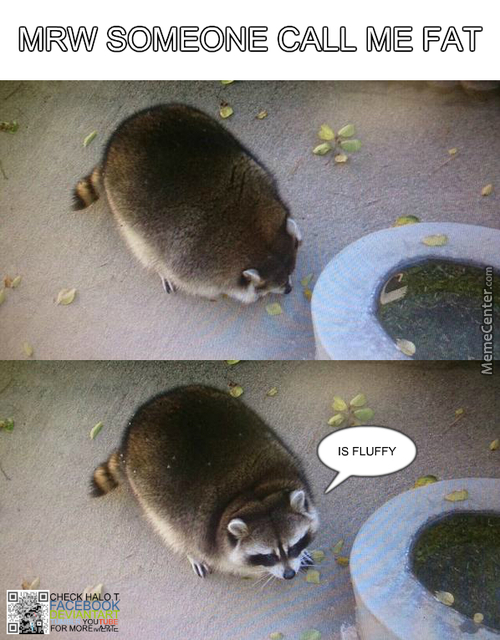 Is Fluffy ! Not Fat