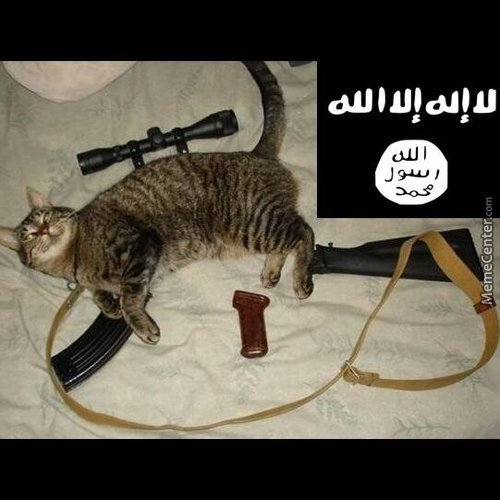 Isis Getting Ready
