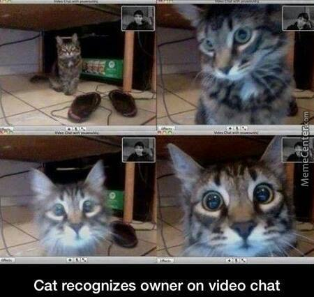 Its Now Videocat.