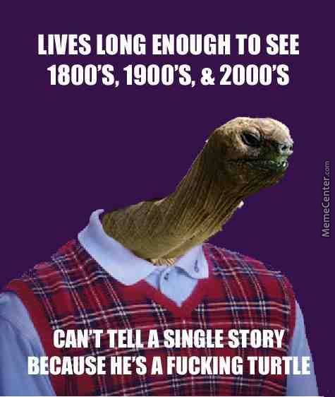 jonathan the turtle_o_3630701 turtle memes best collection of funny turtle pictures