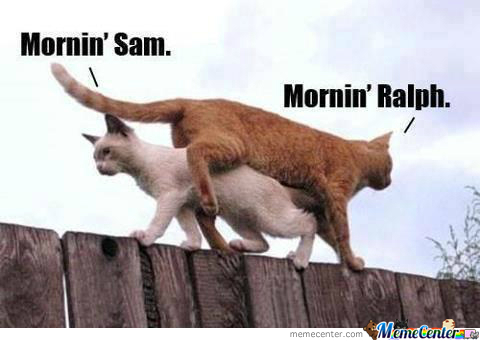 Just Another Fine Day Of Ralph And Sam