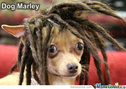 Just.. Dog Marley