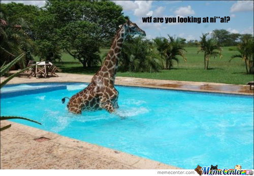 Just Giraffe In A Pool