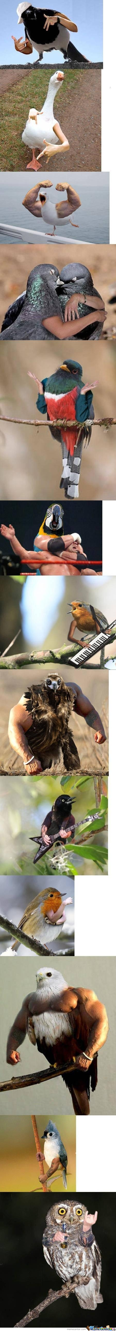 Just Some Birds With Hands