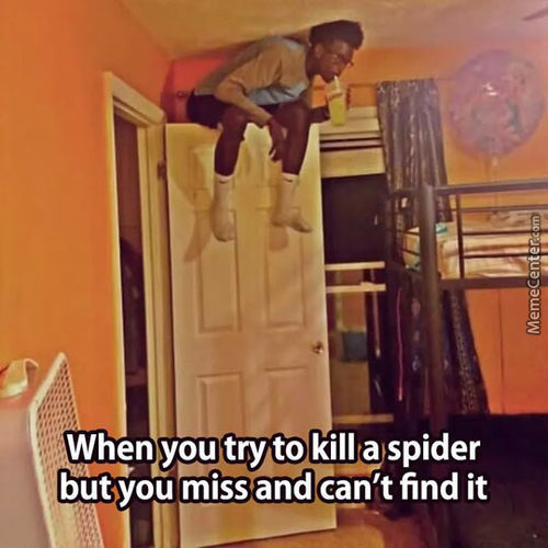 Funny Spider Meme : Kill spider memes best collection of funny